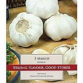 3 x Large Garlic 'Marco' Bulbs - Vegetable Bulbs