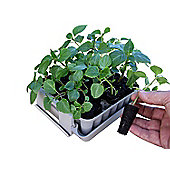 Agralan Compact Garden Plug Plant Trainer - No Need for a Greenhouse
