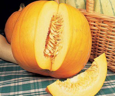 pumpkin (pumpkin 'Jack O'Lantern')