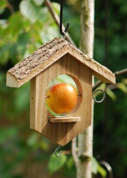 Apple / suet bird feeder