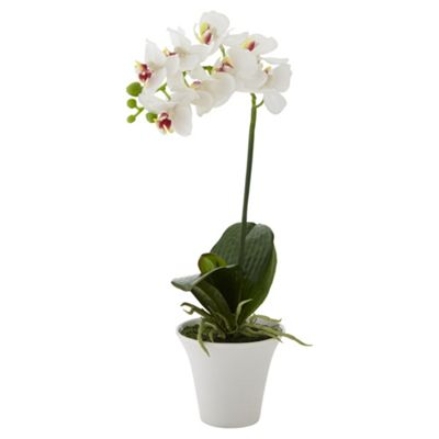 buy orchid in white ceramic pot from our artificial. Black Bedroom Furniture Sets. Home Design Ideas