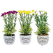 Homescapes Set of 3, Purple, Yellow and White Artificial Potted Dianthus Flowers