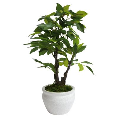 F&F Home evergreen in white pot