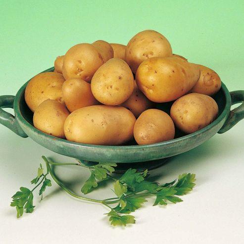 Potato 'Lady Christl' - 5 tubers