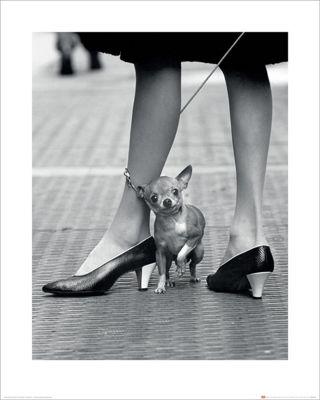 Time Life Chihuahua Mini Print 40 x 50cm