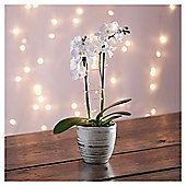 Light Up Mini Orchid