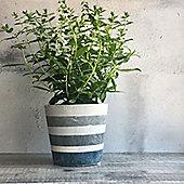 Blue Striped Concrete Plant Pot Cover