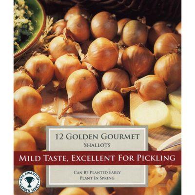 12 x Shallot Onion 'Golden Gourmet' Sets - Vegetable Bulbs