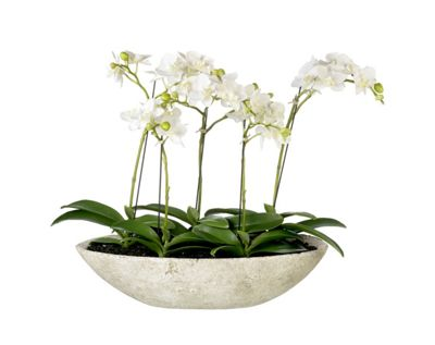 buy parlane three pretty artificial orchids in an oval. Black Bedroom Furniture Sets. Home Design Ideas