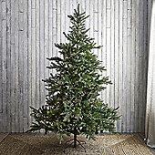 Kaemingk 6ft Noble Pine Artificial Christmas Tree