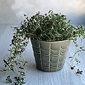 Green Scallop Plant Pot