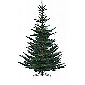 Natural Cut Green Spruce Christmas Tree - 6ft - 180cm