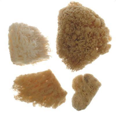 Royal Combi Sea Sponge Set