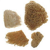 Royal Combi Sea Sponge Set
