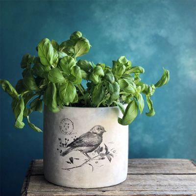 Concrete Bird Plant Pot