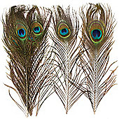 Natural Peacock Feathers for Children/Adult Crafts Collage & Creative Projects - Fancy Dress Costume Mask Decoration (Pack of 10)