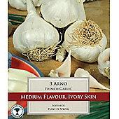 3 x French Garlic 'Arno' Bulbs - Vegetable Bulbs