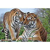 Feed The Big Cats By Hand (Weekdays) at Paradise Wildlife Park