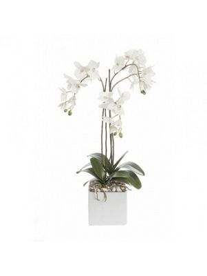 Artificial - Arrangement - Phalaenopsis Cube - White/Cream