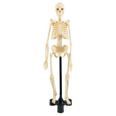 Revell X-Ray Human Skeleton Model