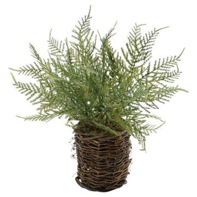 28cm Artificial Asparagus Fern In Twig Pot