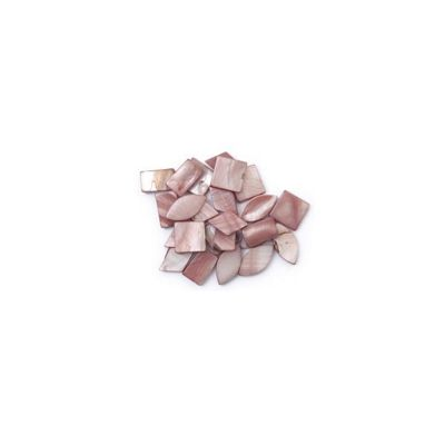 Craft Factory Shell pk24 4 Assorted Styles Oyster