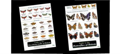 Wildlife worlds field guide - Butterfly