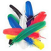Quill Feathers Assorted 12 Pk