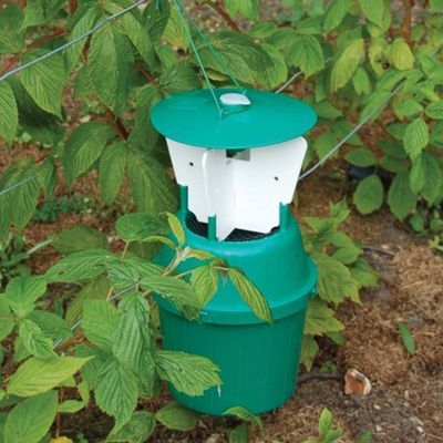 Raspberry Beetle Trap - 1 beetle trap