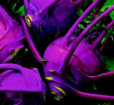 kohl rabi (kohl rabi 'Purple Delicacy')