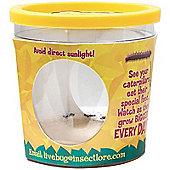 Insect Lore Caterpillar Refill Certificate (for 5 Caterpillars)