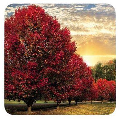Pimpernel Crimson Trees Coasters, Set of 6