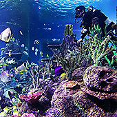 Diving with Sharks Experience at Skegness Aquarium