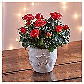 Red Rose in Star Ceramic
