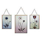 Copper Wild Flowers Set of 3 Glass Prints 30cm x 80cm Overall