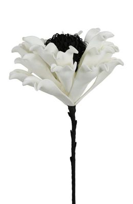 White Foam Single Stem Cabbage Rose Flower